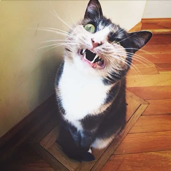 """Cat Sneeze Fever is listed (or ranked) 4 on the list The Funniest """"Caught Mid-Sneeze"""" Photos Ever"""