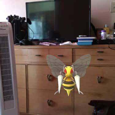 The Huge Murder Bees