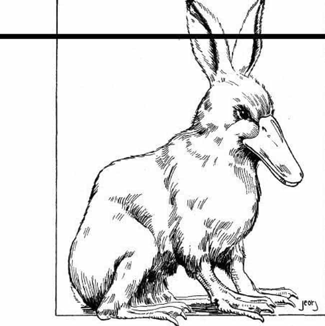 Duck Bunny is listed (or ranked) 1 on the list The Worst Dungeons & Dragons Monsters in the Monster Manual