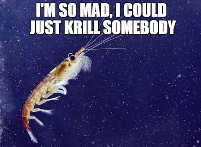 License to Krill is listed (or ranked) 2 on the list The Absolute Funniest Fish Puns Ever