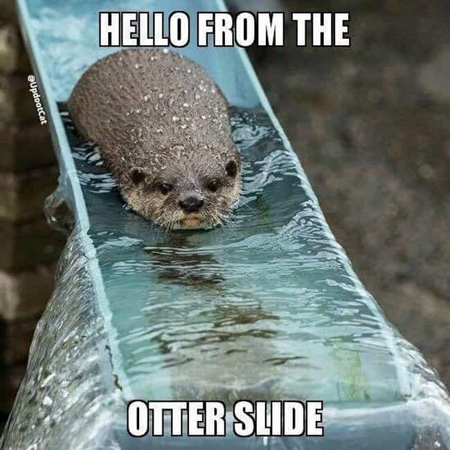 Slippery Slope is listed (or ranked) 2 on the list The Absolute Funniest Animal Puns