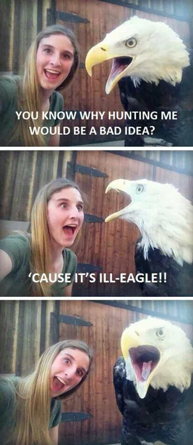 Street Legal Eagle is listed (or ranked) 2 on the list The Absolute Funniest Bird Puns Ever