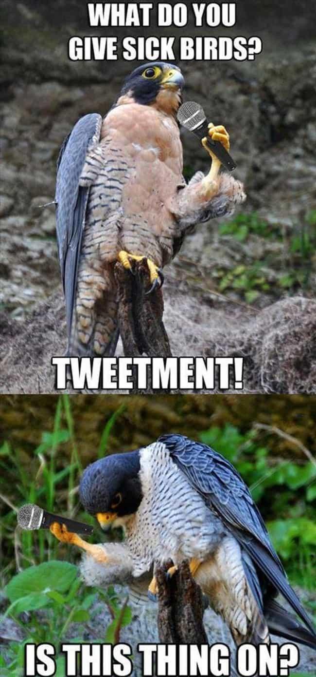 Tweet Surrender is listed (or ranked) 4 on the list The Absolute Funniest Bird Puns Ever