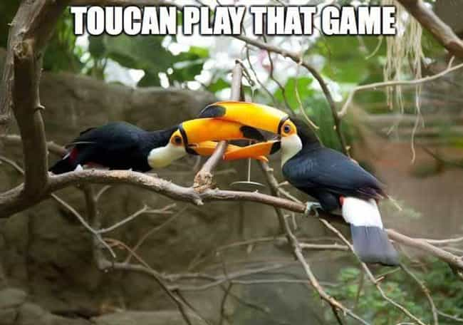 Can It is listed (or ranked) 3 on the list The Absolute Funniest Bird Puns Ever
