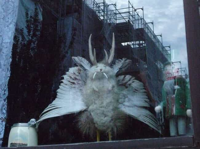 Wolpertinger is listed (or ranked) 1 on the list Hilarious Mythical Creatures That Some People Actually Believe Exist