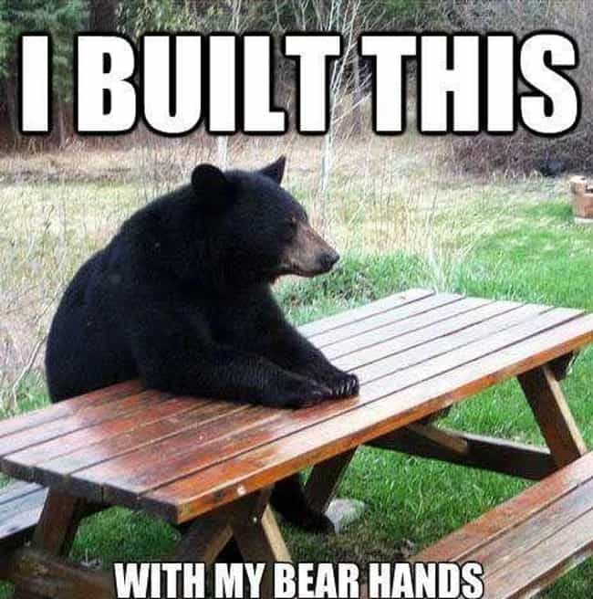 The Bear Necessities Is Listed Or Ranked 1 On List Unbearably Funny Photo Imgur