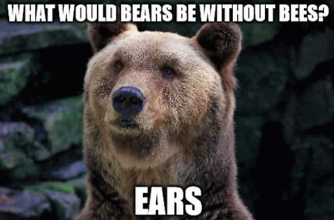 Unbearably Funny Bear Puns Viraluck