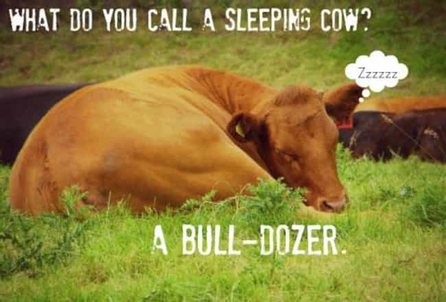 Dozing Off is listed (or ranked) 4 on the list The Absolute Funniest Cow Puns