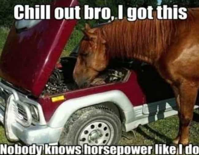 Power Trip is listed (or ranked) 3 on the list The Funniest Horse Puns in the Barn