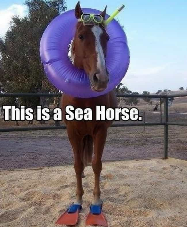 Sea-ing is Believing is listed (or ranked) 3 on the list The Funniest Horse Puns in the Barn