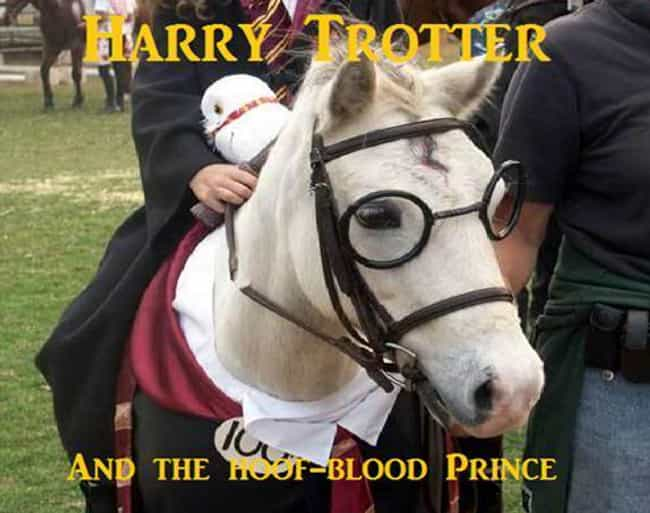 Yer a Horse, Harry is listed (or ranked) 3 on the list The Funniest Horse Puns in the Barn