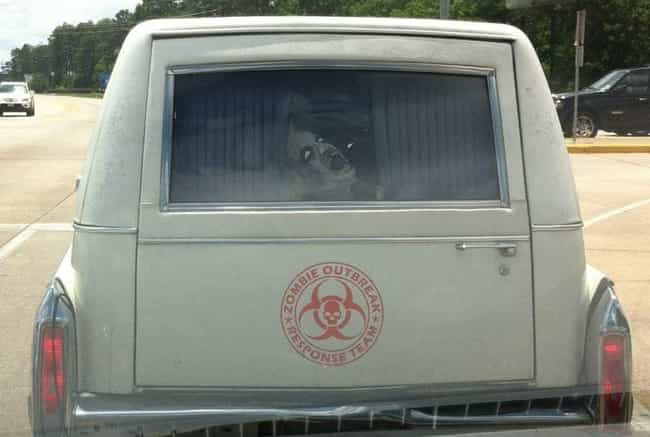 The Driving Dead is listed (or ranked) 1 on the list Funny Hearses You Wouldn't Be Caught Dead In