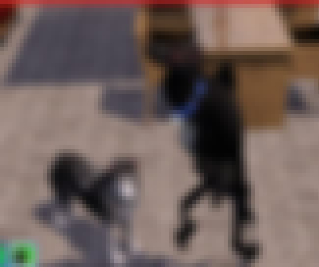 """I'm a Fellow Dog, I S... is listed (or ranked) 4 on the list These Glitches From The Sims Prove That Reality Is An Endless Sea Of Madness"