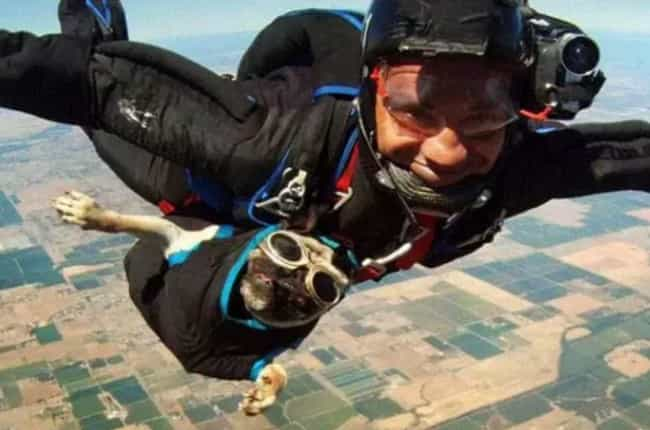 Dogs Days of Summer is listed (or ranked) 3 on the list The 16 Funniest Photos in Skydiving History
