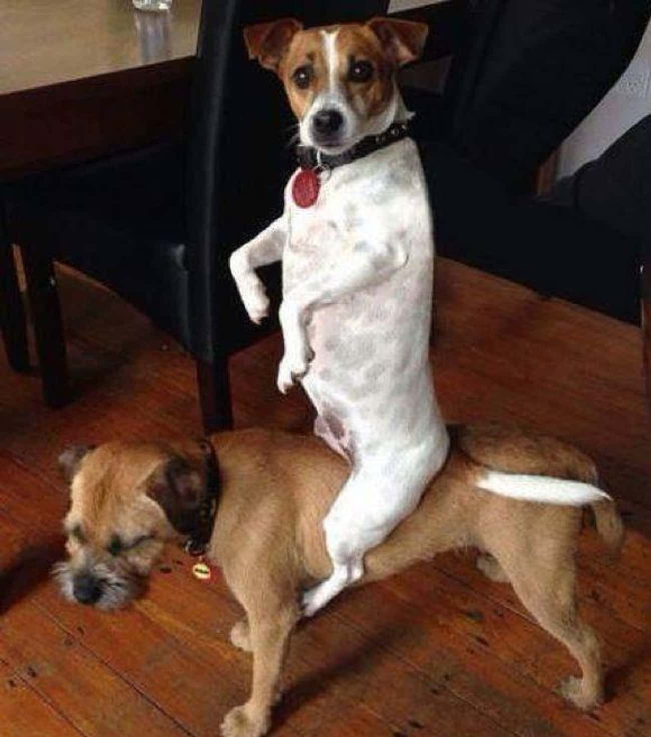 Sooo... You're Home Early is listed (or ranked) 4 on the list 29 Guilty Dogs Who Were Totally Caught in the Act