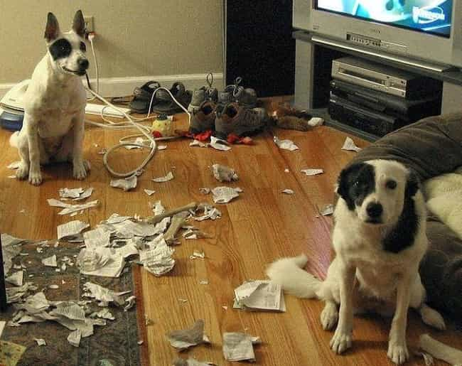 He Did It is listed (or ranked) 3 on the list 29 Guilty Dogs Who Were Totally Caught in the Act