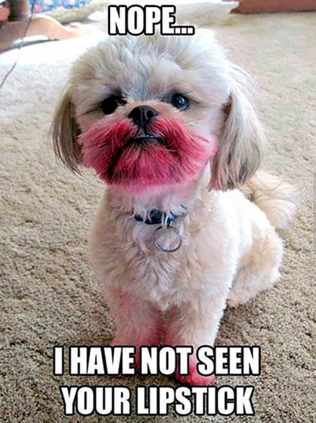 Read My Lips is listed (or ranked) 4 on the list 29 Guilty Dogs Who Were Totally Caught in the Act