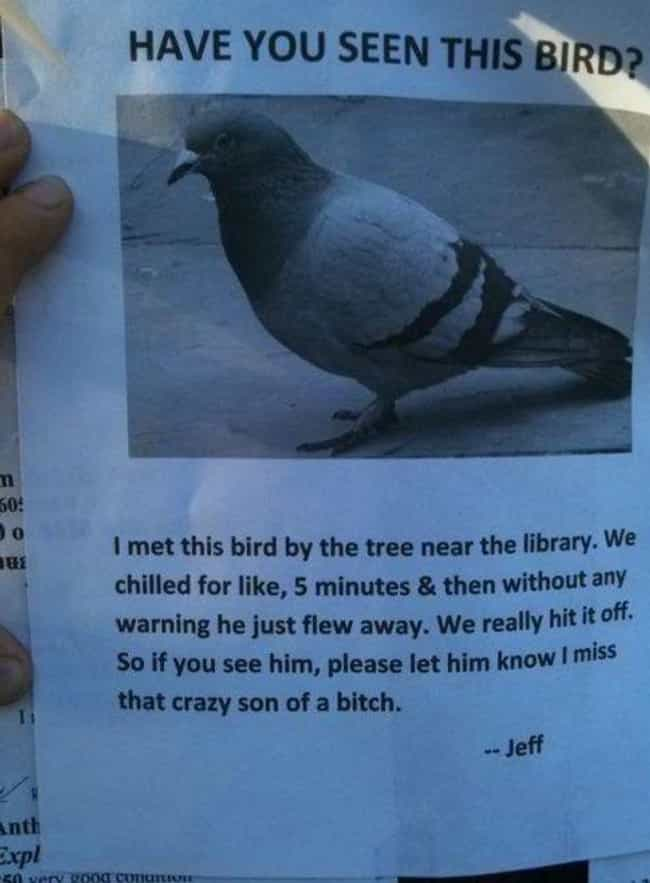 Bird's Eye View is listed (or ranked) 2 on the list 22 Hilarious Fliers Found on College Campuses