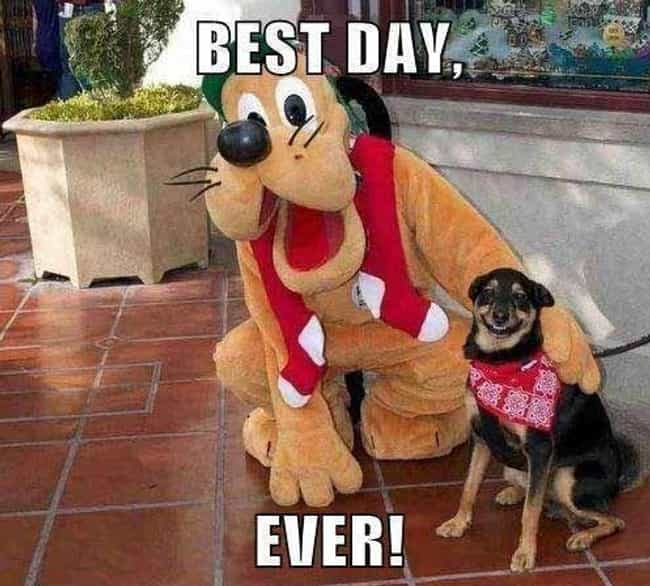 When Doggy Met Goofy is listed (or ranked) 3 on the list People Who Are Clearly Having the Best Day Ever