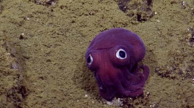 This Friendly-Looking Ro... is listed (or ranked) 1 on the list 75 Stunning Oceanic Invertebrates That Deserve A Closer Look