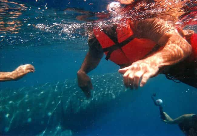 What It's Like to Be Attacked by a Shark