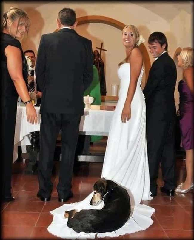 This Dog, Who Found the Perfec... is listed (or ranked) 1 on the list These Photos of Animals at Weddings Are Just Delightful