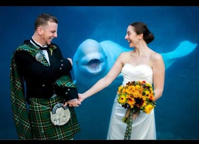 You May Now Kiss The Bride! is listed (or ranked) 4 on the list These Photos of Animals at Weddings Are Just Delightful