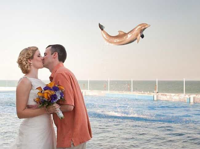 Yaaaaay! is listed (or ranked) 2 on the list These Photos of Animals at Weddings Are Just Delightful