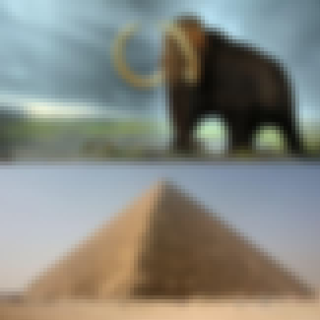 Woolly Mammoths Were Still Ali... is listed (or ranked) 3 on the list Historical Events You Won't Believe Happened at the Same Time