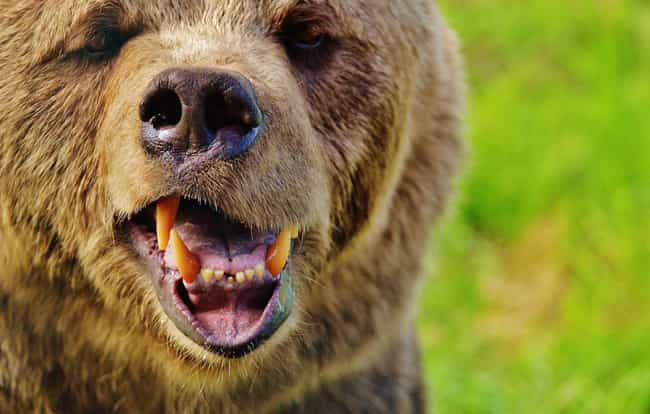 Afraid of Summoning Bear... is listed (or ranked) 1 on the list 9 Forbidden Words and Phrases You Must Never, Ever Say Aloud