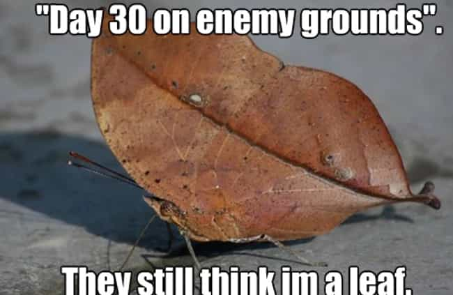 Ground Troops is listed (or ranked) 8 on the list 22 Memes To Get You Ready For Fall