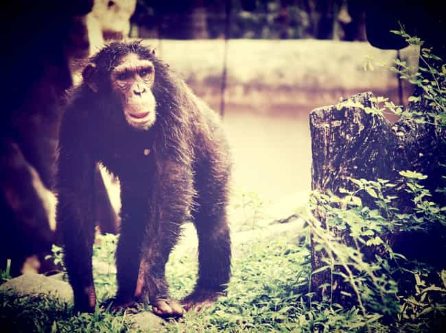 Bonobos Frequently Have Same-S... is listed (or ranked) 4 on the list Strange Facts You Can't Unlearn About Primate Sex