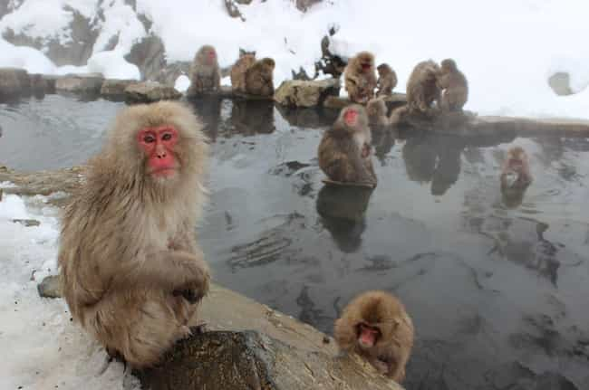 Macaque Monkeys Engage in Pros... is listed (or ranked) 1 on the list Strange Facts You Can't Unlearn About Primate Sex