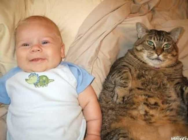 The Resemblance Is Uncanny is listed (or ranked) 1 on the list 20 Photos of Babies with Cats That You Won't Be Able to Resist