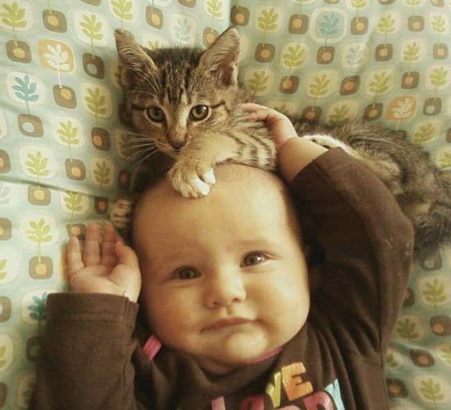 A Real Head Scratcher is listed (or ranked) 4 on the list 20 Photos of Babies with Cats That You Won't Be Able to Resist