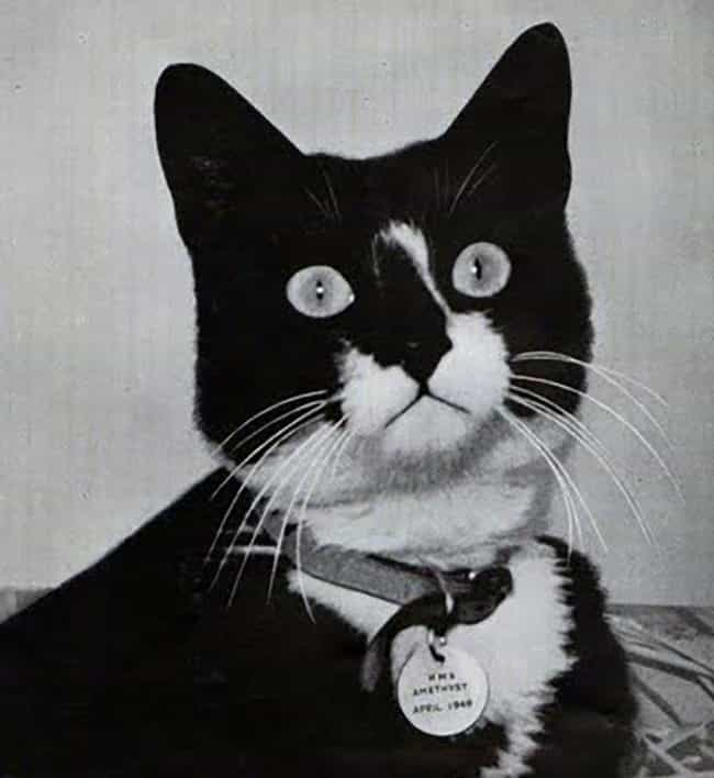 Unsinkable Sam, Survivor of Sh... is listed (or ranked) 2 on the list 14 Notably Awesome Cats from History