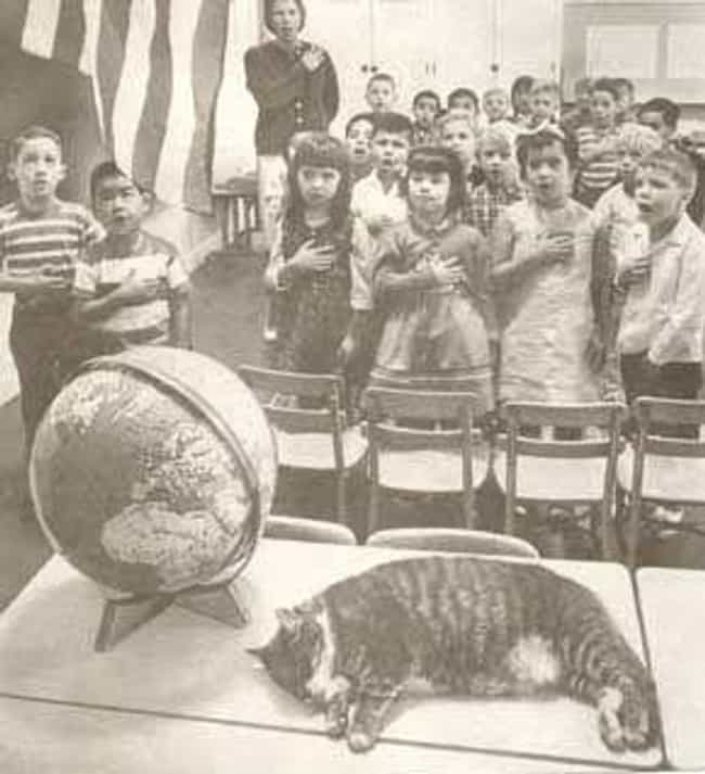 Room 8, the Best Class P... is listed (or ranked) 5 on the list 14 Notably Awesome Cats from History