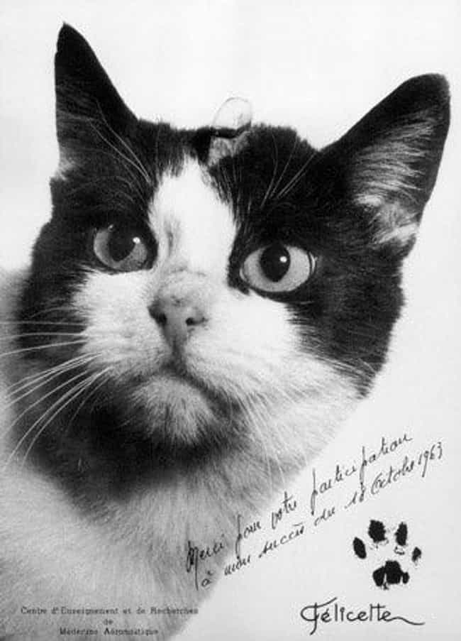 Félicette, Explorer of the Fin... is listed (or ranked) 3 on the list 14 Notably Awesome Cats from History