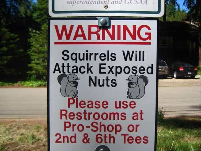 Nutty Sign is listed (or ranked) 2 on the list 22 Funny Signs That Avid Golfers Will Appreciate