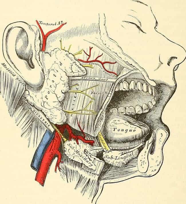 Your Carotid Artery Closes is listed (or ranked) 4 on the list What Happens to Your Body When You Are Hanged to Death
