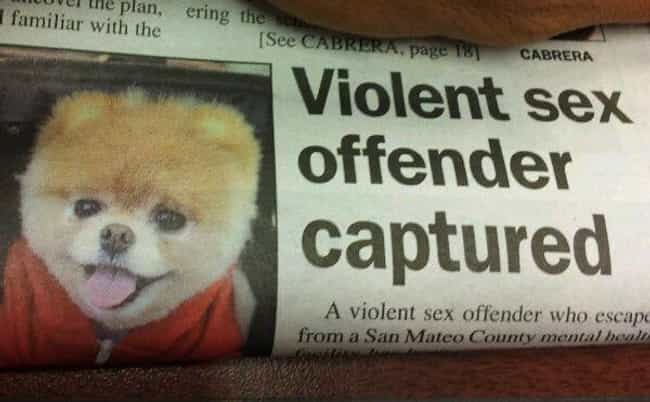 Ladies and Gentleman, You Can ... is listed (or ranked) 2 on the list 27 Accidentally Hilarious Newspaper Headlines