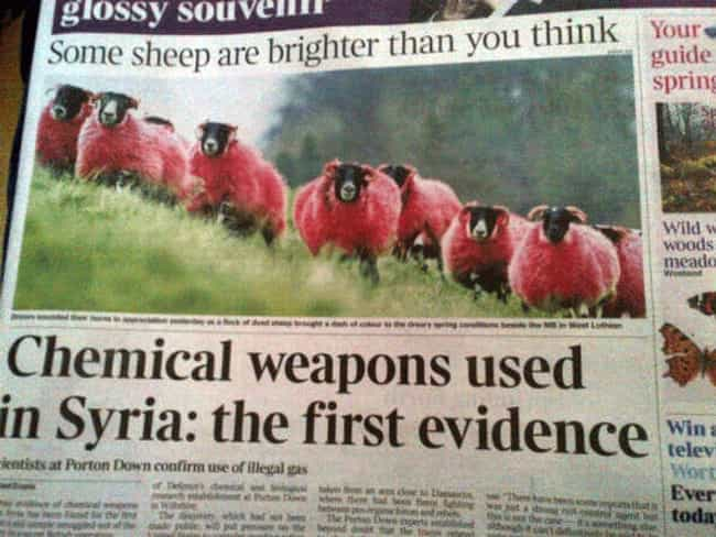 """""""Dang It, Syria."""" - Sh... is listed (or ranked) 4 on the list 27 Accidentally Hilarious Newspaper Headlines"""