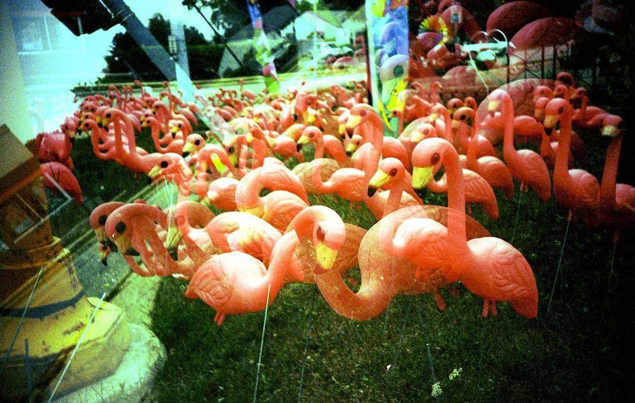 Plastic Flamingos: From Elegant Ornament to King of Kitsch