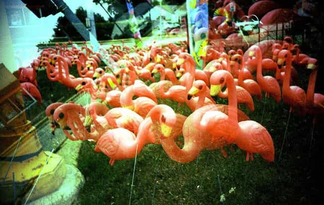 Plastic Flamingos: From ... is listed (or ranked) 1 on the list Popular Lawn Ornaments Everyone Has and Why They Became a Thing