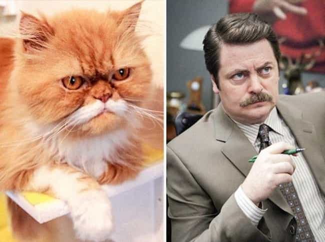 Ron Swanson Cat is listed (or ranked) 3 on the list Cats Who Look Like Famous TV Characters