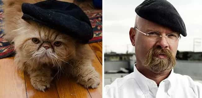 Jamie Hyneman Cat is listed (or ranked) 4 on the list Cats Who Look Like Famous TV Characters