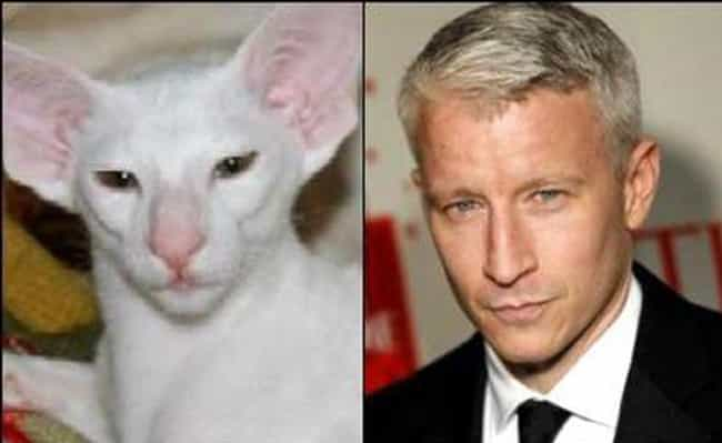 Anderson Coo-Purr is listed (or ranked) 2 on the list Cats Who Look Like Famous TV Characters