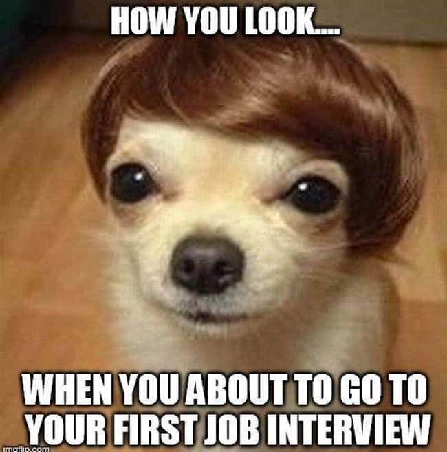 Hair of the Dog is listed (or ranked) 22 on the list 25 Photos That Pretty Much Sum Up Most Job Interviews