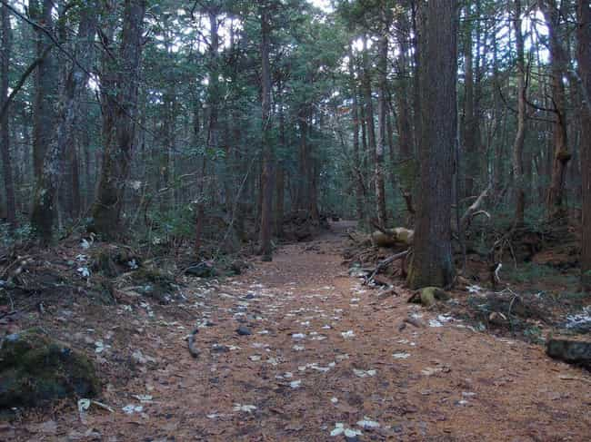 Aokigahara Forest, Japan is listed (or ranked) 1 on the list 12 Super Haunted Forests You Never Want To Get Lost In