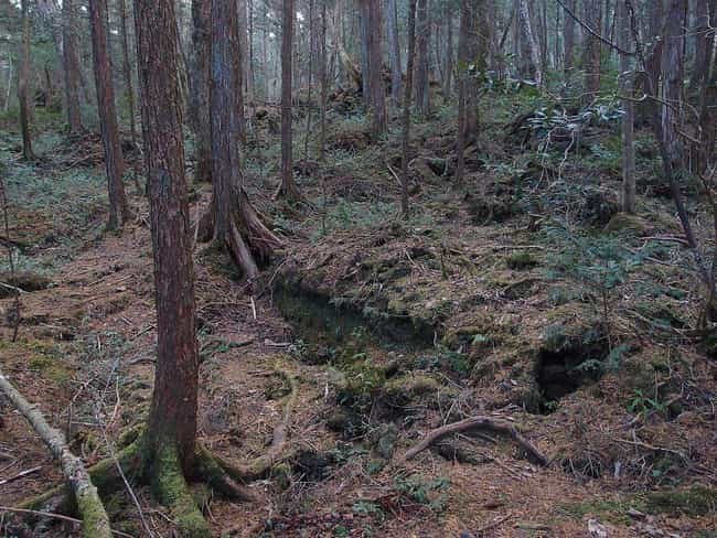 Aokigahara Forest, Japan... is listed (or ranked) 1 on the list 12 Super Haunted Forests You Never Want To Get Lost In